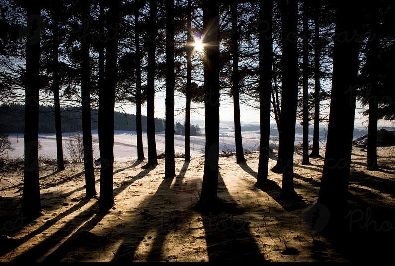woodline.jpg